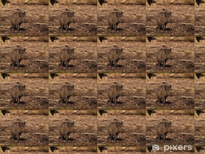 Vinyltapete nach Maß Wildschwein - Sus scrofa - Säugetiere