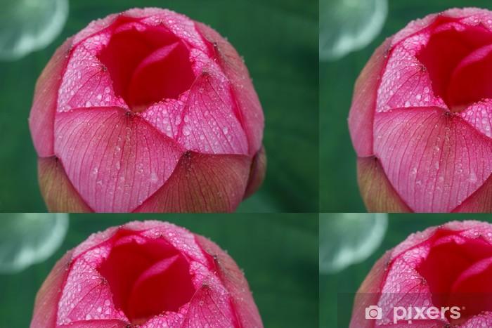 Vinylová Tapeta Lotus (Tokyo, Ueno medvěd bazén) - Květiny