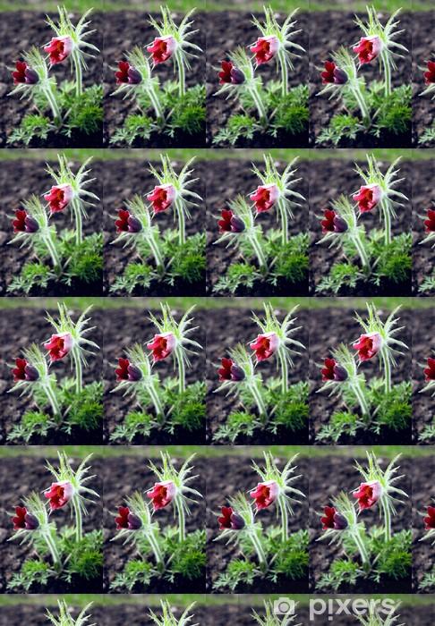 Vinyltapete nach Maß Küchenschelle - Blumen