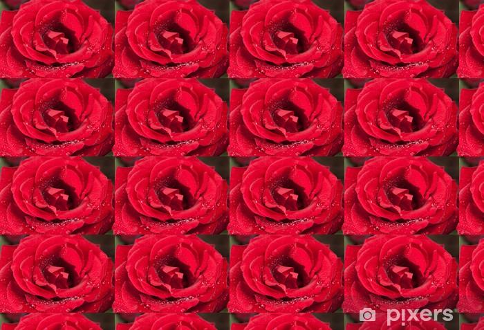 Tapeta na wymiar winylowa Czerwona róża krople rosy. - Krajobraz wiejski