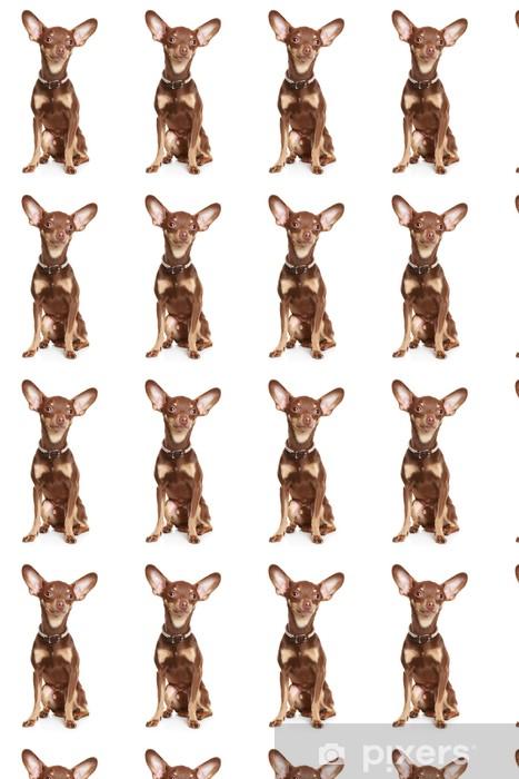 Tapeta na wymiar winylowa Rosyjski toy terrier - Ssaki