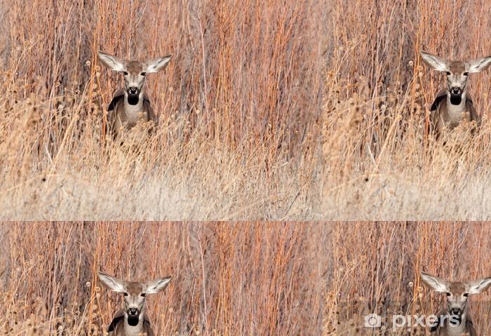 Papel Pintado Estándar Gama de los ciervos de mula en un campo - Mamíferos