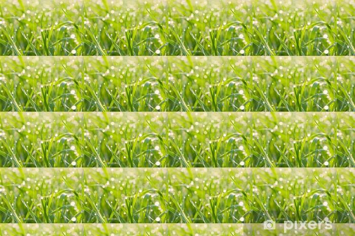 Tapeta na wymiar winylowa Plamy światła z rosa na trawie - Rośliny