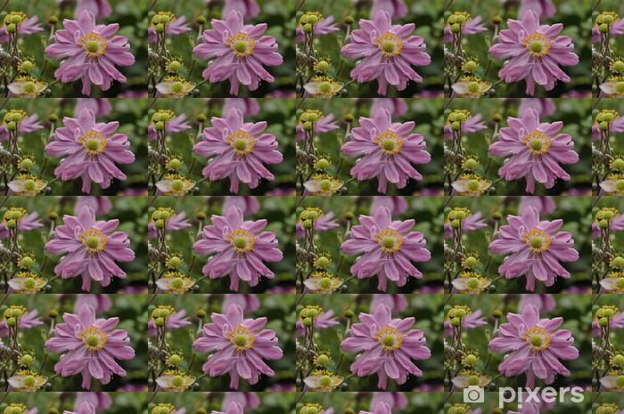 """Tapeta na wymiar winylowa """"Anemone x hybrida / Anemone Japonii Pamina """""""""""" - Dom i ogród"""