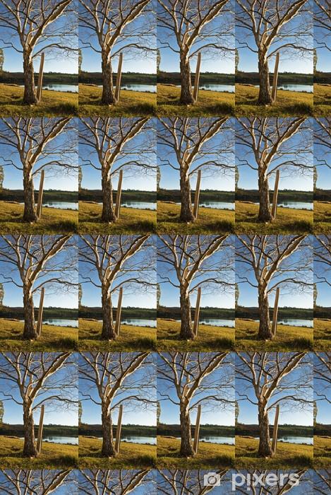 Tapeta na wymiar winylowa Zima brzoza, Jezioro Trevallyn, Launceston, Tasmania, Australia - Pory roku