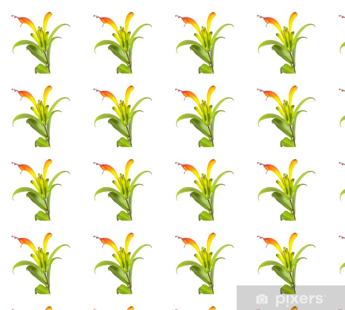 Vinyltapete nach Maß Lippenstift-Anlage (Aeschynanthus speciosus) - Blumen
