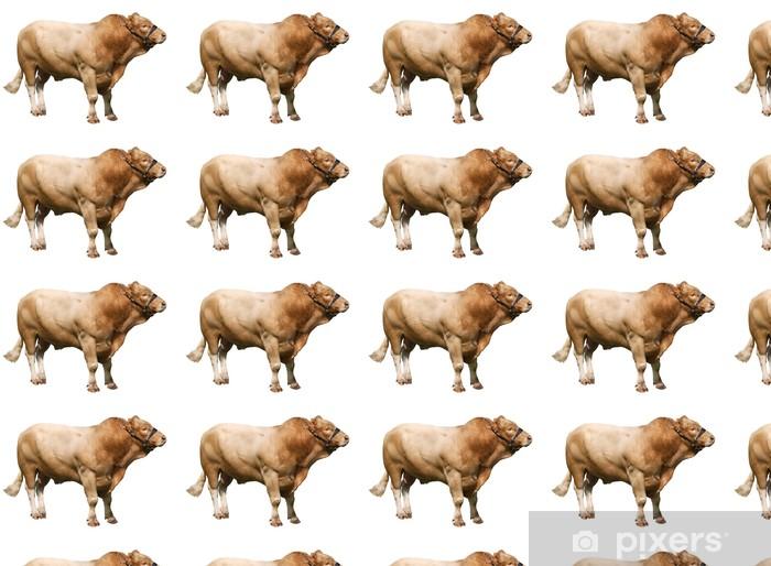 Vinyltapete nach Maß Große Gelbvieh bull - Säugetiere