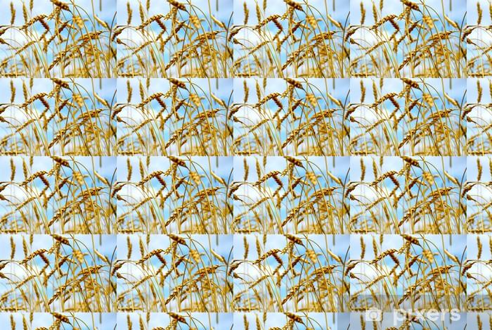 Tapeta na wymiar winylowa Pole ziarna - Nasiona