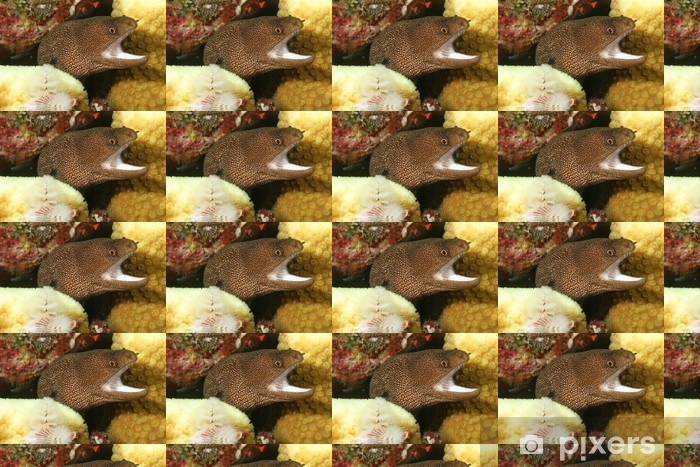 Vinyl behang, op maat gemaakt Goldentail Moray (Gymnothorax miliaris) - Bonaire - Onderwater