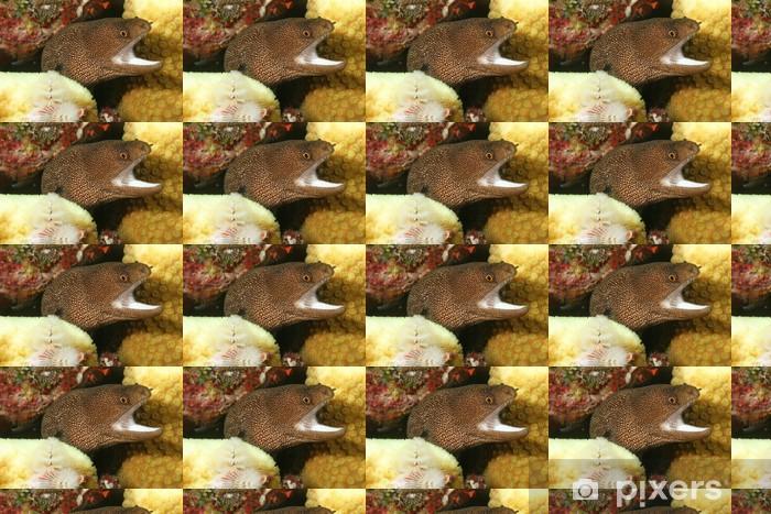 Özel Boyutlu Vinil Duvar Kağıdı Goldentail Moray (Gymnothorax miliaris) - Bonaire - Sualtı hayvanları