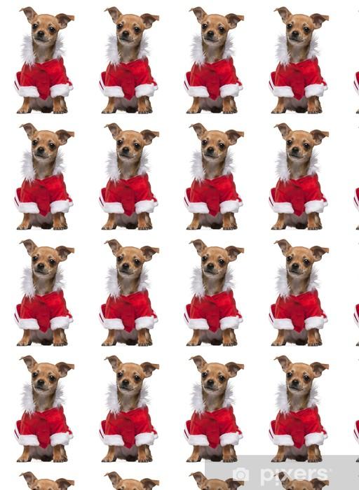 Tapeta na wymiar winylowa Chihuahua puppy ubrani w Santa ubranie, 6 miesięcy, siedzący - Ssaki