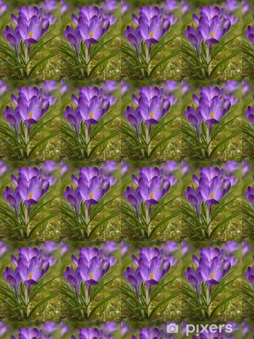 Tapeta na wymiar winylowa Crocus, Crocus - Kwiaty