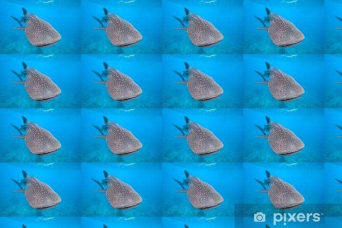 Tapeta na wymiar winylowa Rekin wielorybi - Rekiny