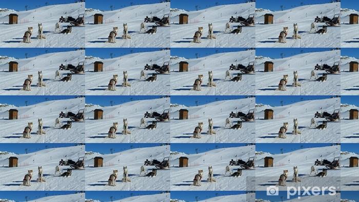 Vinyl behang, op maat gemaakt Huskies - Wintersport