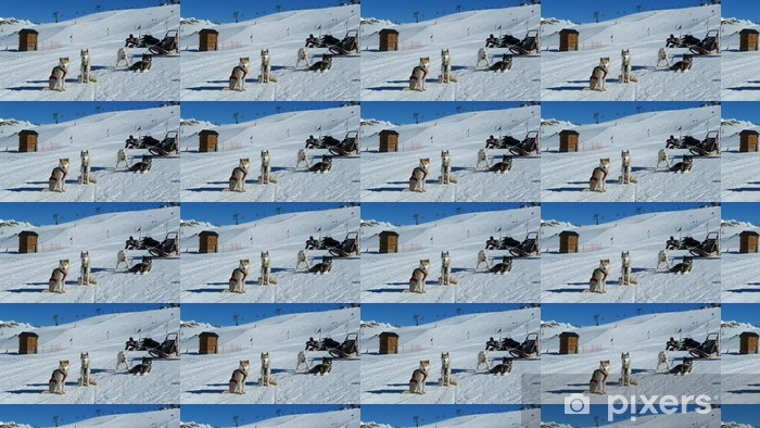 Vinyltapete nach Maß Huskies - Wintersport