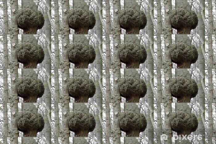 Papier peint vinyle sur mesure Big loupe sur un arbre - Arbres