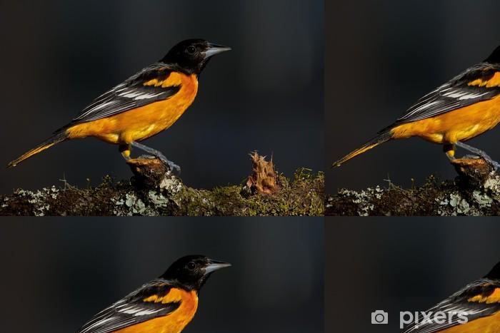 Vinylová Tapeta Baltimore žluva (žloutenka galbula) - Ptáci