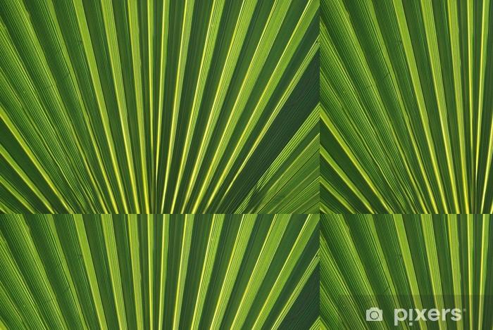 Tapeta winylowa Micro LITERY. Palmito, Chamaerops humilis - Rośliny