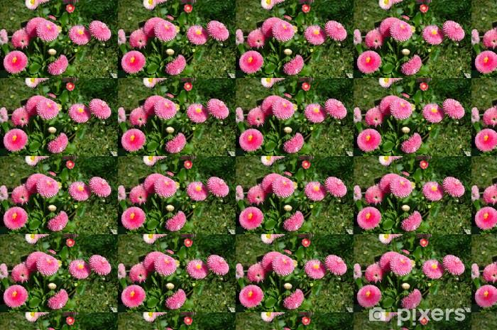 Vinyl behang, op maat gemaakt Rosa Gänseblümchen auf Wiese - Bloemen
