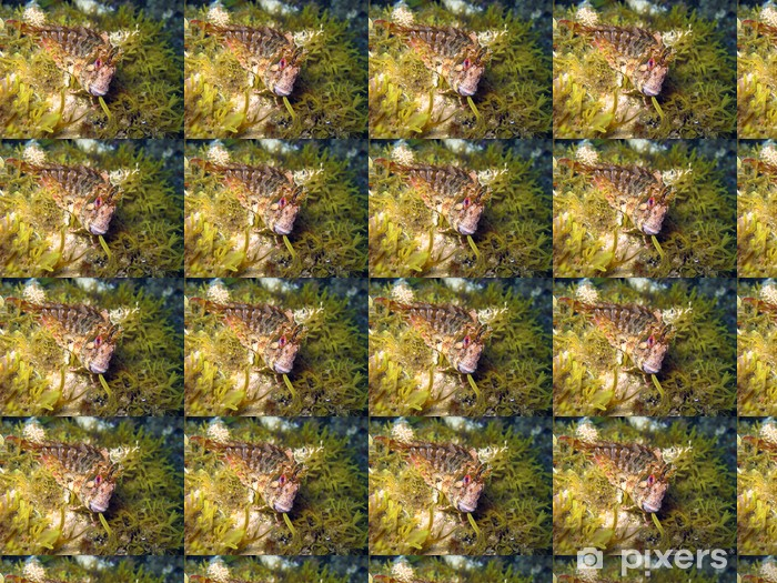 Papel Pintado Estándar Blenny Parablennius gattorugine - Animales marinos