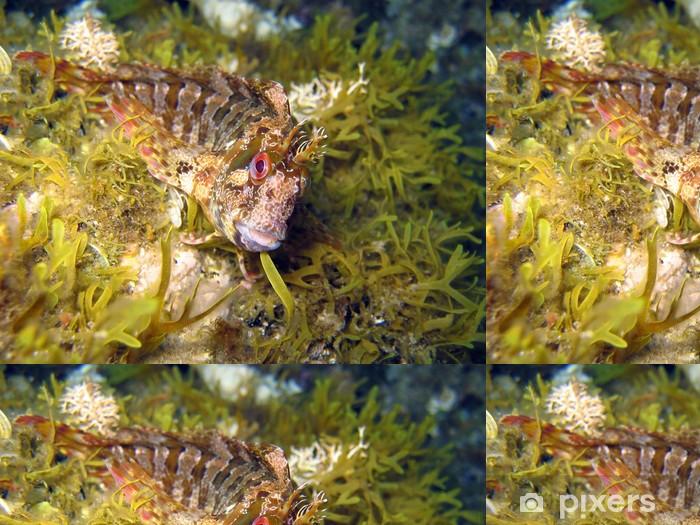 Blenny Parablennius gattorugine Vinyl Wallpaper - Aquatic and Marine Life