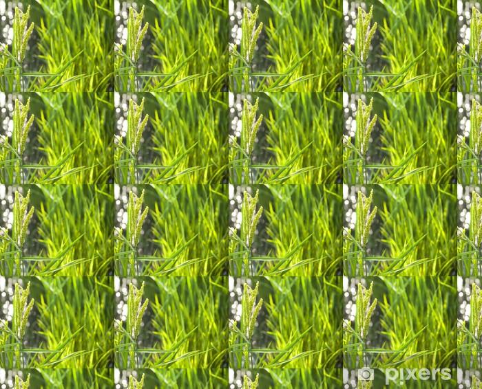Papier peint vinyle sur mesure Champ de riz / paddy au soleil / flou sélectif sur la fo - Saisons