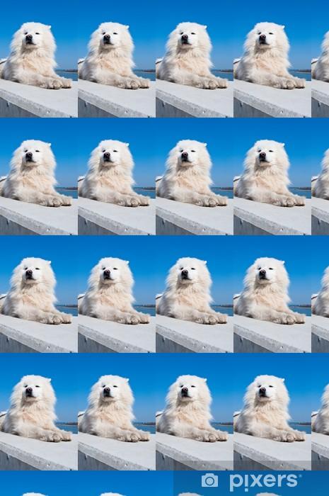 Papier peint vinyle sur mesure Samoyède, chien esquimau américain - Mammifères