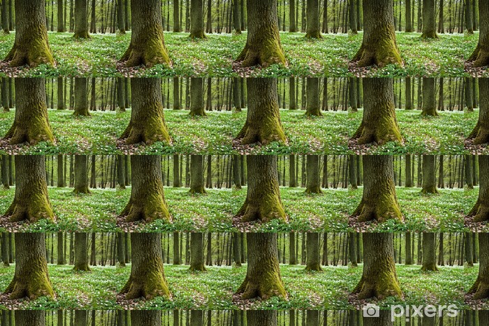 Tapeta na wymiar winylowa Omszały stare drzewa i białe zawilce w lesie - Ekologia