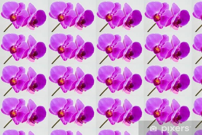 Tapeta na wymiar winylowa Purpurowe Orchidea samodzielnie na białym tle. - Tematy