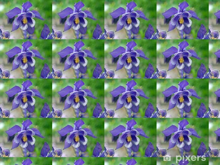 Tapeta na wymiar winylowa Akelei - Aquilegia - Kwiaty
