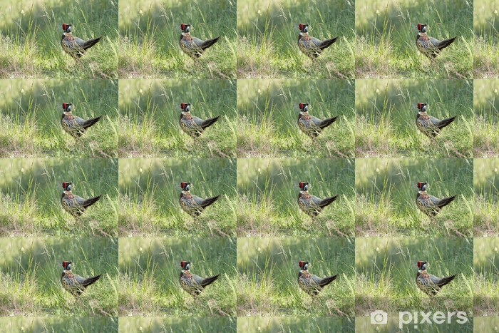Papier peint vinyle sur mesure Phasianus colchicus - Coq faisan - Faisan de Colchide - Oiseaux
