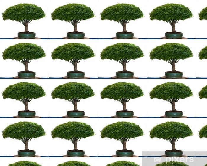 Vinylová tapeta na míru Acer palmatum Kiyohime als Bonsai - Stromy