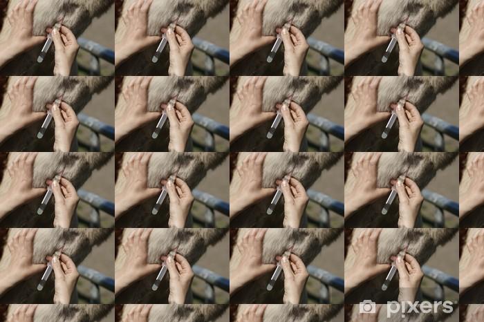 Tapeta na wymiar winylowa Koń wkłucia - Zdrowie i medycyna