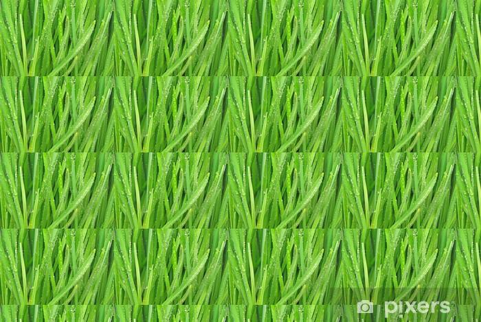 Tapeta na wymiar winylowa Krople rosy na ostrza trawy. - Rośliny