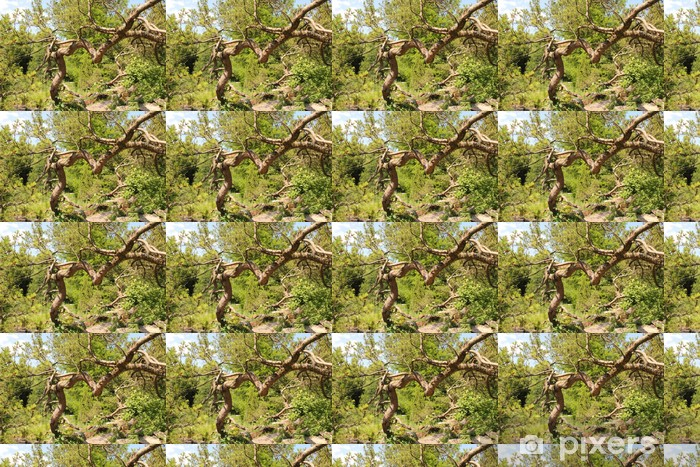 Vinylová tapeta na míru Pinus mugo - Bergkiefer - Stromy