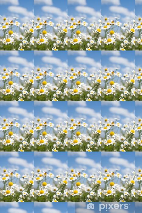 Papier peint vinyle sur mesure Marguerites blanches sur le ciel bleu - Fleurs