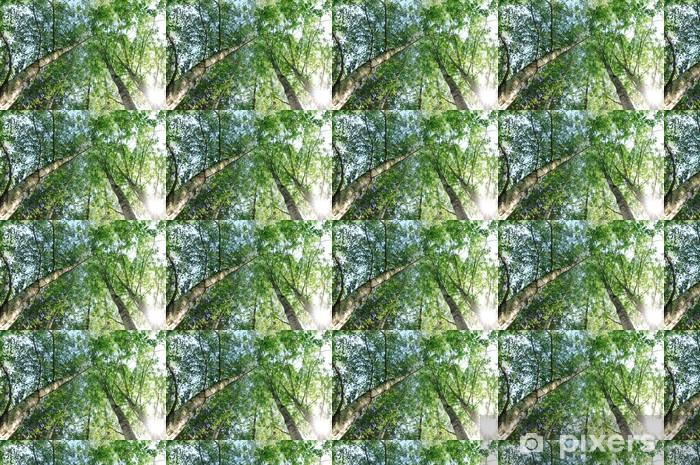 Vinyl behang, op maat gemaakt Birch trees - Bomen