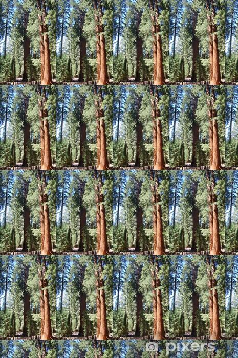 Papier peint vinyle sur mesure Sentier sequoia - Amérique