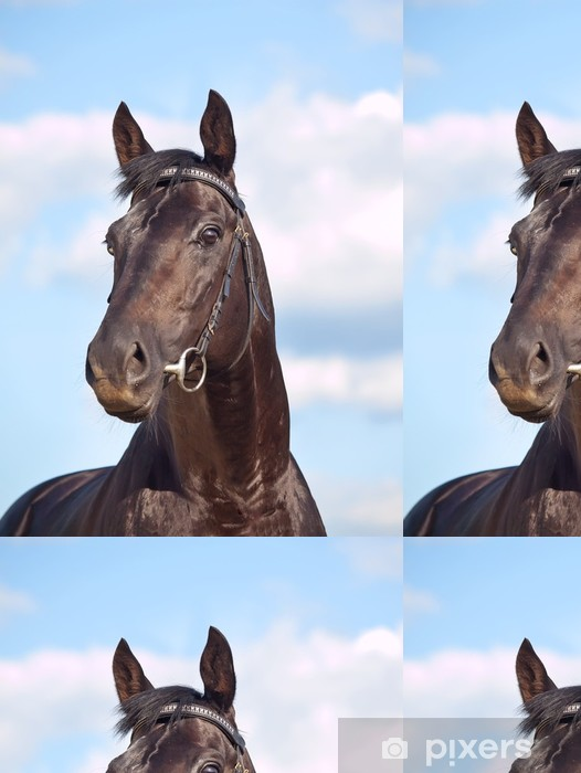 beautiful black stallion at blue sky Vinyl Wallpaper - Mammals