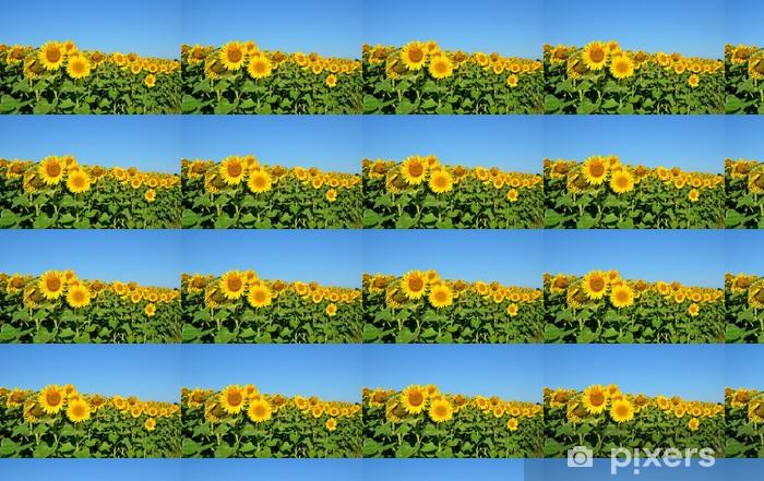 Tapeta na wymiar winylowa Pole słoneczników - Rośliny