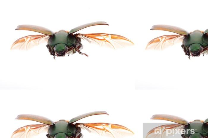 Vinylová Tapeta Létající hmyz Skarabeus - Ostatní Ostatní