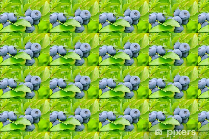 Papier peint vinyle sur mesure Blueberry sur arbuste 01 - bleuet arbuste 04 - Plantes