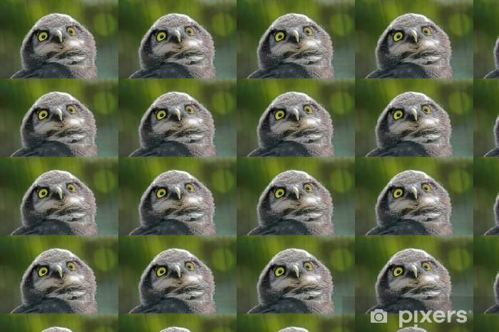 Owl Räätälöity vinyylitapetti - Luonnon Ihmeet