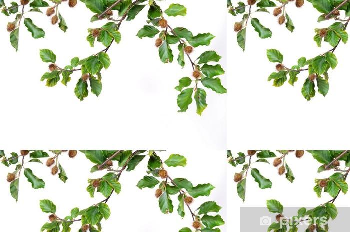 Vinylová Tapeta Buk buk buk listy na podzim bukvice - Stromy