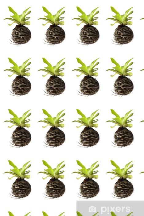 Tapeta na wymiar winylowa Ptasie gniazdo paproci - Rośliny