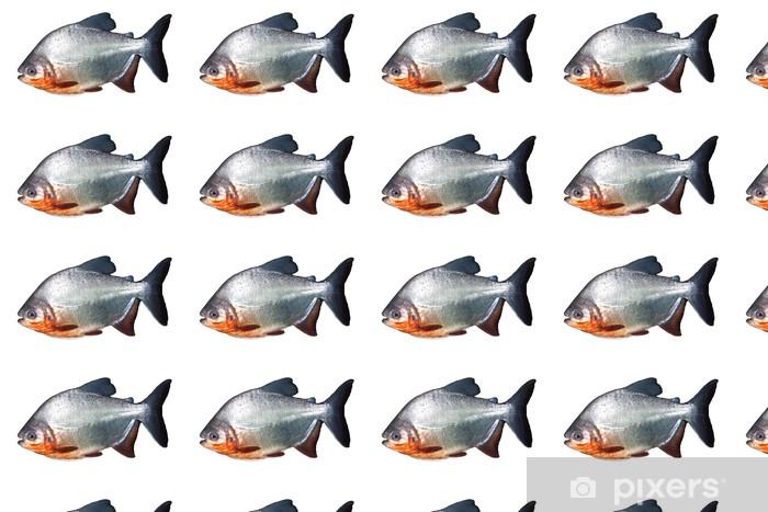 Tapeta na wymiar winylowa Pirania - Zwierzęta żyjące pod wodą