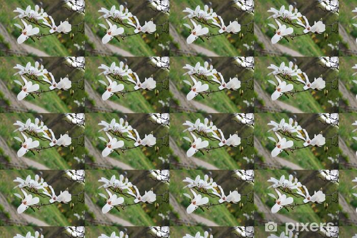Tapeta na wymiar winylowa Kwiaty magnolii - Kwiaty
