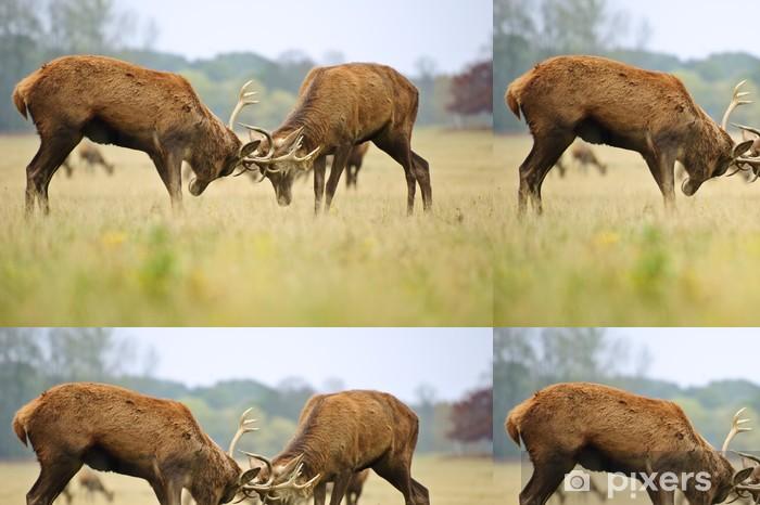 Vinylová Tapeta Red Deer jeleni rytířská s parohy na podzim pádě prales meado - Témata