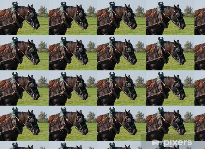 Vinylová tapeta na míru Portrét hnědého tažného koně - Savci