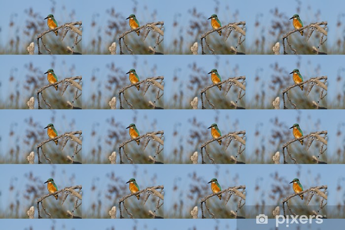 Vinyltapete nach Maß Martin Fischer auf einem Baum - Vögel